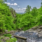 landscape-green-nature-life