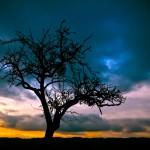 tree-night