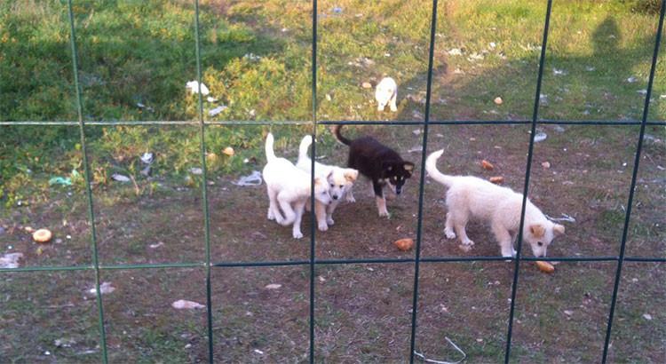 Al via l'appalto per 100.000 euro annui per la custodia dei cani randagi