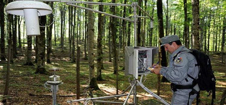CFS: online tutte le informazioni sulle foreste italiane