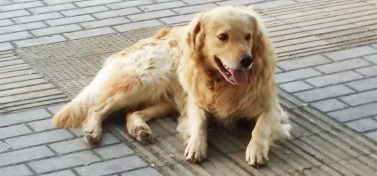 """""""L'emergenza"""" dell'abbandono cani nel periodo estivo"""