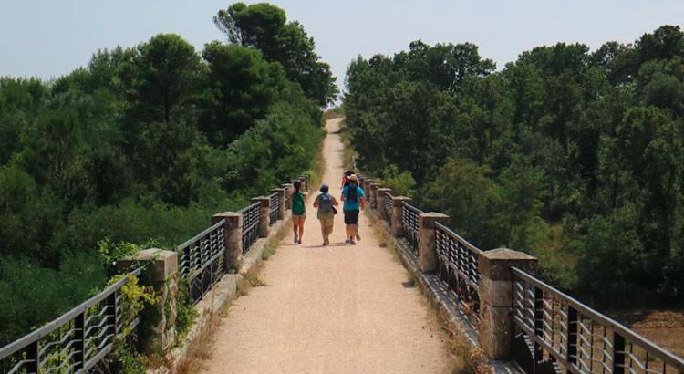 green-city-ponte