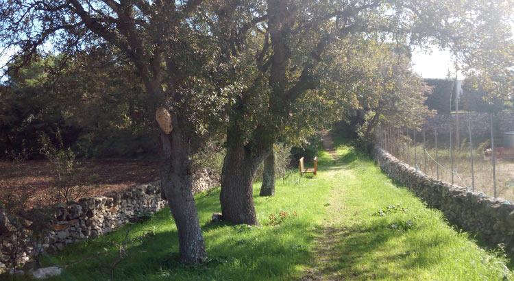 Il nido della Vespa Carabro a Bosco Giordanello