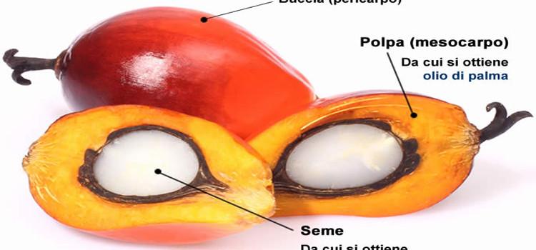Olio di palma: rischi per la salute?