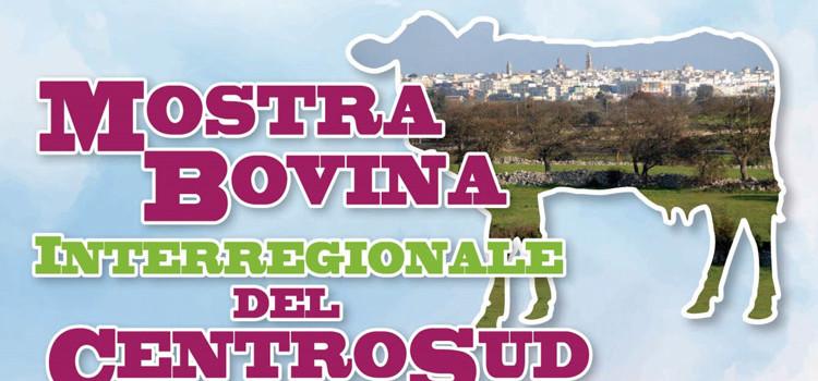 Zootecnia: al Foro Boario l'11^ edizione della Mostra Bovina Interregionale