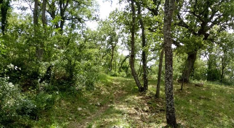 Noci: paese tracciato dagli alberi