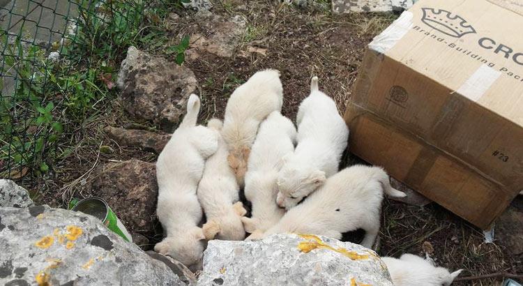 sos-4zampe-cuccioli-cartone
