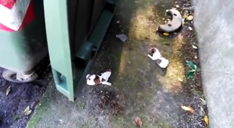 Cuccioli abbandonati nei cassonetti, la denuncia di SOS Adozioni4zampe