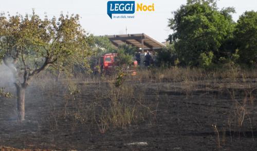 Pomeriggio di fuoco, bruciano ettari di alberi e sterpaglie
