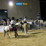 raduno-cavallo-murgese-poni