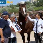 raduno-cavallo-murgese-vincitrice