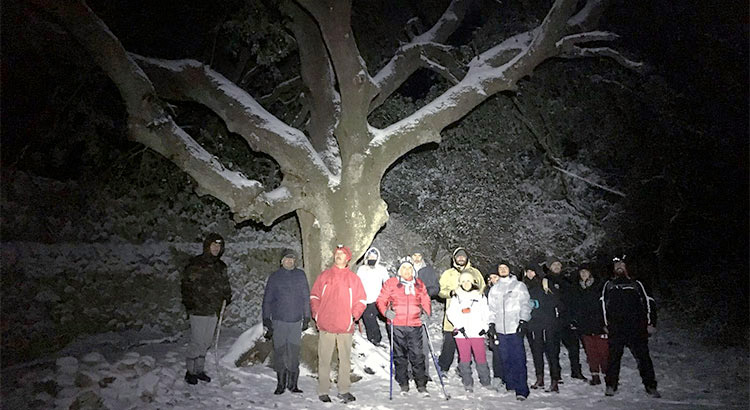 Snowtrekking-Barsento-gruppo-albero