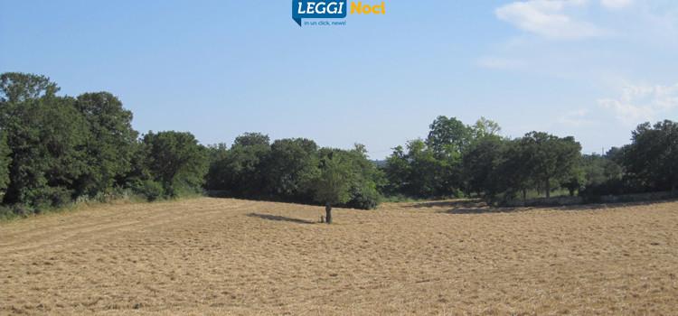 Coldiretti Puglia: famiglie scelgono vacanze in agriturismo, aumentano i vip contadini