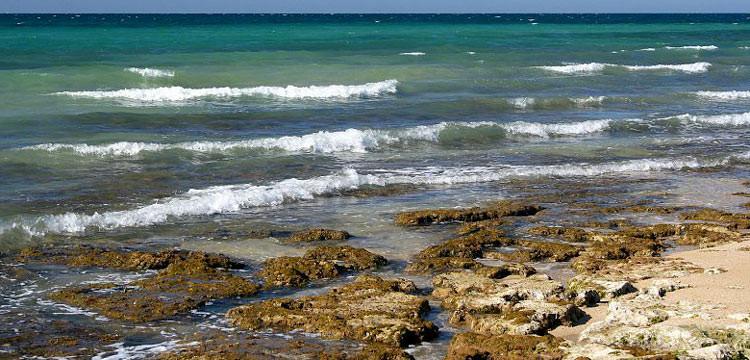 Alga tossica a Torre Canne, sindaco ordina il divieto di balneazione