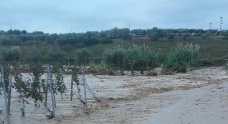 """Maltempo: Coldiretti denuncia danni all'olivicoltura, """"quadro apocalittico"""""""