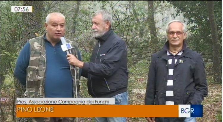Funghi: dai boschi nocesi alla Tv