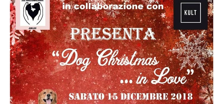 Dog Christmas… In Love