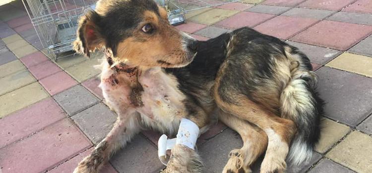 Il Sindaco denuncia il maltrattamento animale