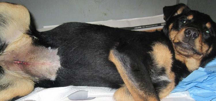 Sterilizzazione cani padronali: ancora disponibili le risorse