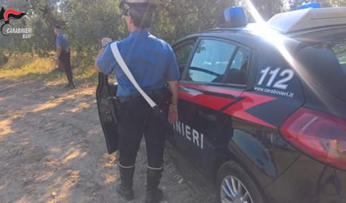 Controlli dei Carabinieri alle aziende agricole. Rilevate violazioni alla legislazione speciale sul lavoro