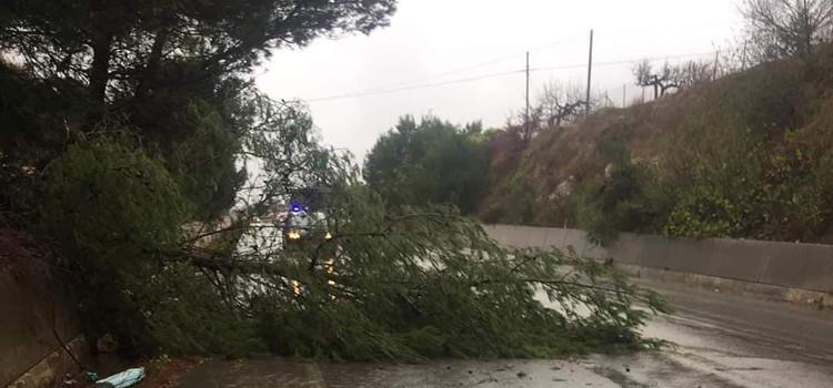 MALTEMPO E DISAGI: crolla un albero sulla Noci-Putignano