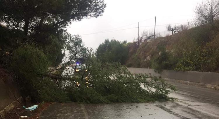 MALTEMPO E DISAGI: crolla un albero sulla Noci-Putignano - LeggiNoci.it