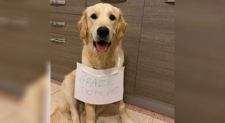 Ingerisce boccone avvelenato, Rio salvato dal veterinario:«grazie dottore»
