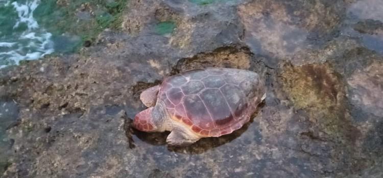 Torre Canne: ennesima tartaruga marina massacrata dall'uomo