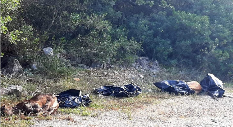 Carcasse di animali abbandonate
